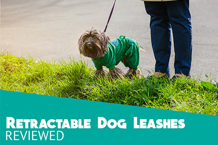 The importance and choice of dog leash
