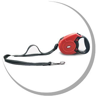 Do you know how to wear a dog leash?